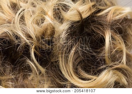 background Streaked Hair . Photo of an abstract texture