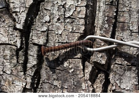 wire on the tree bark . Photo of an abstract texture