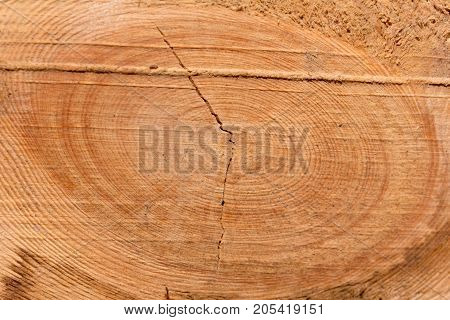 wooden background . Photo of an abstract texture
