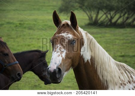 Brown and white spotted horse with white mane on grazing land with others horses.