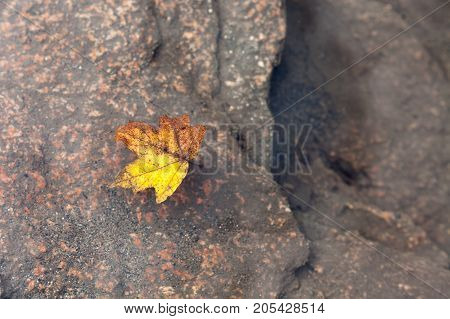 fall, season, freedom concept. fallen maple leaf of fiery red colour floating alone in the transparent peaceful waters of calm and gentle river with stony bottom