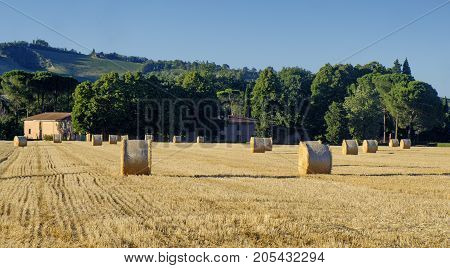 Country landscape between Riolo Terme and Brisighella (Ravenna Emilia Romagna Italy) at summer.