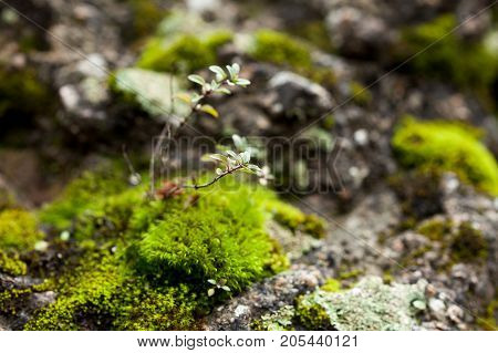 micro life, researching, environment concept. close up of rock that is covered by green and fluffy moss and other different plants that growing in its notches like