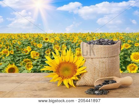 sunflower seeds in burlap bag, fresh sunflower, scoop with seeds on wooden table with natural background. Blooming sunflower field with blue sky and sunshine. Agriculture and harvest concept