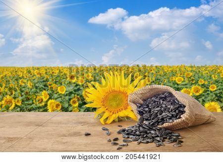 scattered sunflower seeds out of bag and fresh sunflower on wooden table with natural background. Blooming sunflower field with blue sky and sun. Agriculture and harvest concept