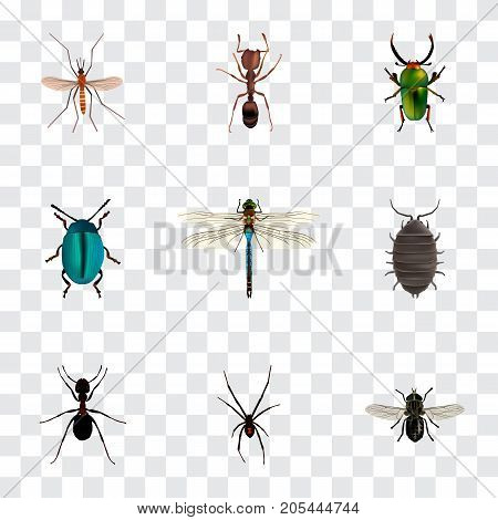 Realistic Emmet, Gnat, Damselfly And Other Vector Elements
