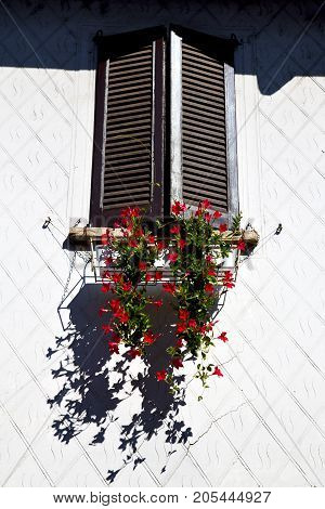 Red   Lombardy      The Milano Old   Window Closed Brick   Flower