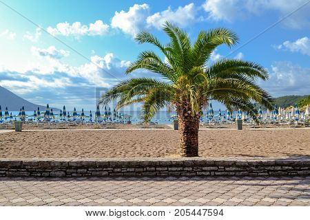 Palm tree on the background of the beach Montenegro. The Budva Riviera. Becici.