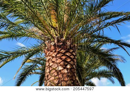 The palm against the sky of Montenegro. The Budva Riviera. Becici.