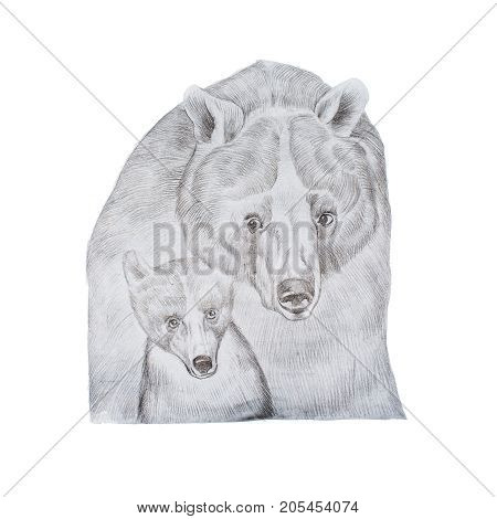 Portrait of realistic grey mother bear and cub hand-drawn.