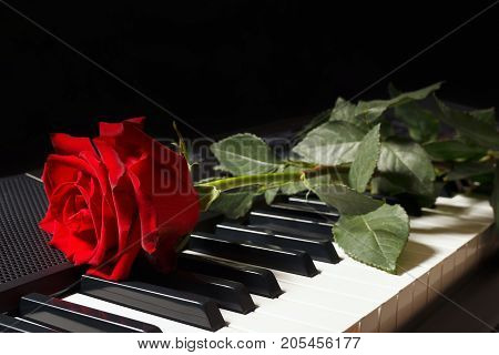 Scarlet rose on keyboard of the electronic synthesizer on a black background