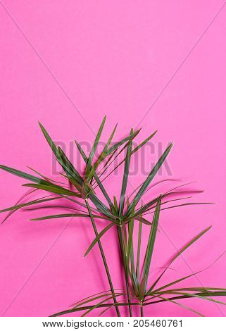 Tropical leaves on pink background. minimal concept. Flat lay.