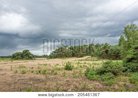 Landscape with threatening clouds on the National Park Hoge Veluwe Netherlands.