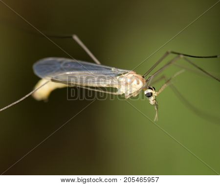 mosquito in nature. macro . In the park in nature