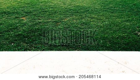 Grass.Green. Grass Background. Natural green grass texture Natural green grass background for design with copy space for text or image.