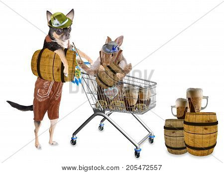 Cute chihuahua dog drive a cart with beer barrel with cute bunny for Oktoberfest
