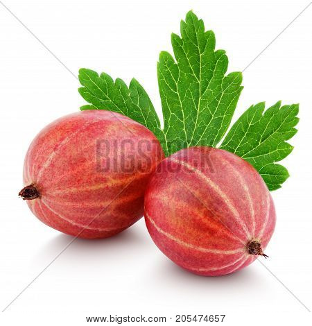 Closeup of two ripe red gooseberry berry with gooseberry leaf isolated on white background