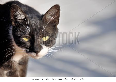frightened homeless cat on an abstract background.