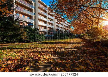 Autumn in the streets of Dresden. Germany. Europe.