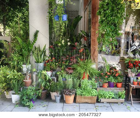 Different plants and flowers in pots near the flower shop entrance in Tel Aviv