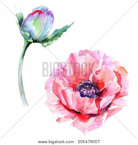 Wildflower poppy flower in a watercolor style isolated. Full name of the plant: pink poppy. Aquarelle wild flower for background, texture, wrapper pattern, frame or border.