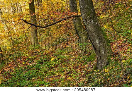 Beautiful Forest Background In Golden Foliage