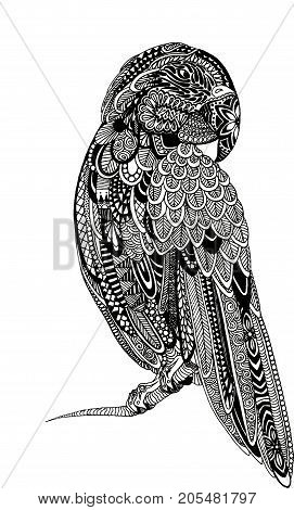 Zentagle Parrot Ink Illustration. Hand drawn stylized ink painted illustration of a parrot.
