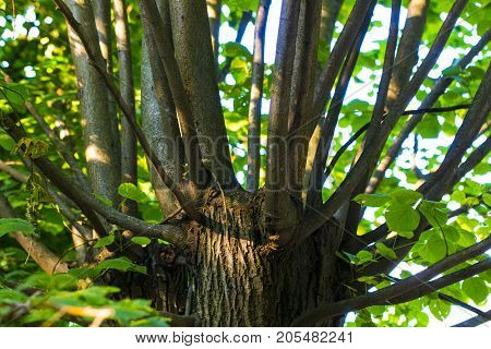 numerous green branches extending from the tree trunk.