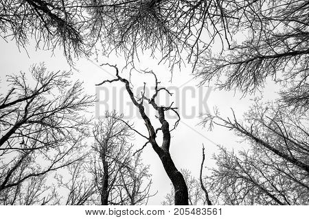 Branches of tree tops textured winter forest background