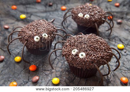 Chocolate spider cupcakes for a Halloween party