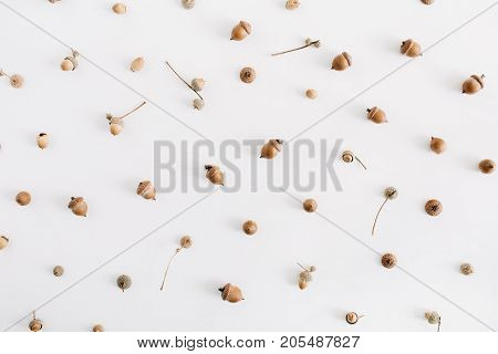 Acorns pattern. Flat lay autumn fall minimal concept.
