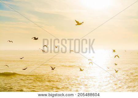 Seagulls flying over the sea at dusk. California USA
