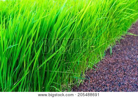 abstract big and magnificent green grass closeup