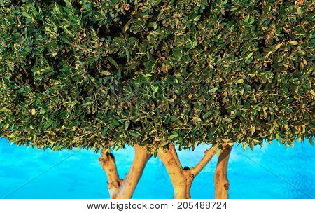 part big abstract wood with magnificent green leaves closeup