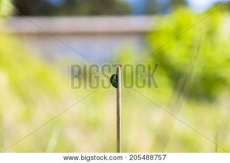 Small green bug on plant macro photo closeup