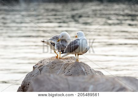 Two seagulls standing on rocks near the sea