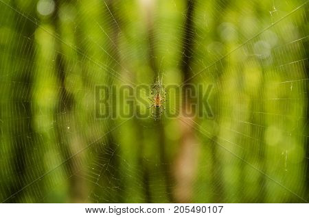 in the autumn forest the spider hiding in its web for extraction wove a network of thin threads