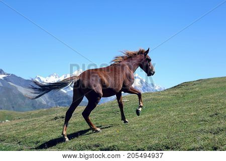 horse running in the green grass on a background of mountains