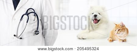 veterinary with stethoscope in pocket dog and cat isolated on white vet clinic banner concept
