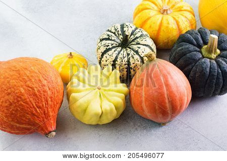 Autumn crops. Different varieties of pumpkins and gourds on the off white background, selective focus