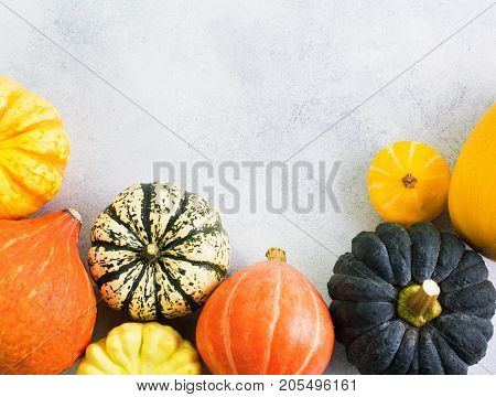 Top view of different varieties of pumpkins and gourds with copy space for text on the off white background, selective focus
