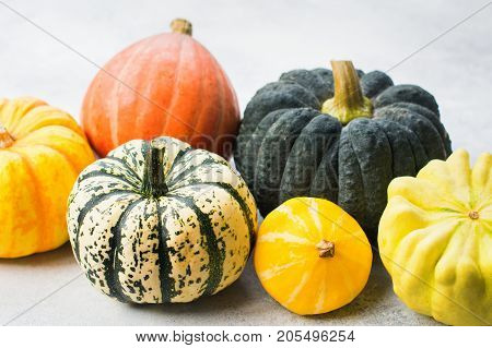 Close up of different pumpkins and gourds on the off white background, copy space for text, selective focus