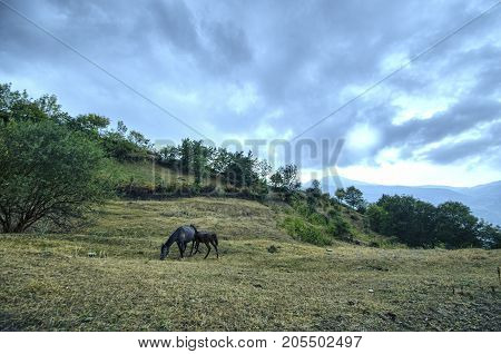 Mother Horse And Baby Foal At The Green Field. Mountains Of Azerbaijan. Caucasus