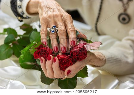 Old female hands holding roses. Senior woman hands with red nails and silver ring holding beautiful bouquet of red roses flowers.
