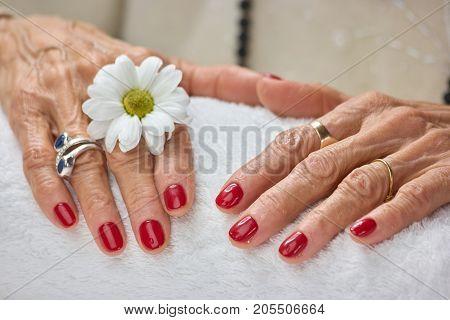 Woman hands with chrysanthemum after spa. Woman hands with white chrysanthemum on a towel. Skin care and aroma therapy.