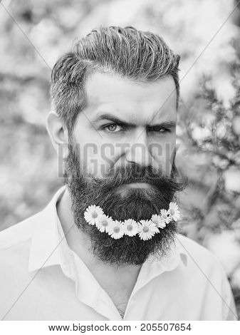 Handsome hipster man brunette with daisy flowers in beard in black shirt with elegant mustache and stylish hair sunny day outdoor