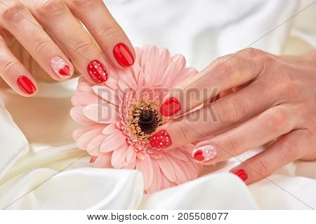 Beautiful gentle gerbera in female hands. Female hands and stylish nails on delicate gerbera. Young woman hands with cute red manicure, gentle flower.