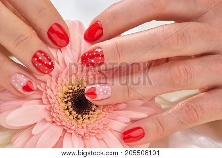 Female beautiful red manicure. Womans hands with gentle manicure on gerbera. Young woman manicure on Valentines Day.