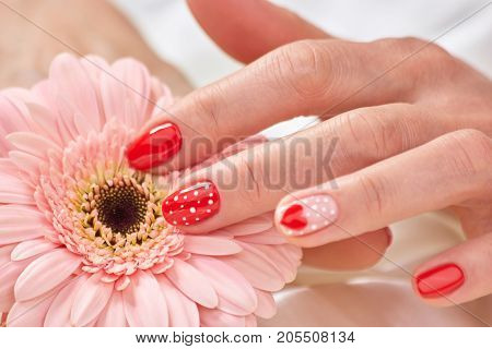 Female manicured hand on gerbera. Peach gerbera and beautiful red manicure with dots and hearts. Female romantic design manicure and flower.