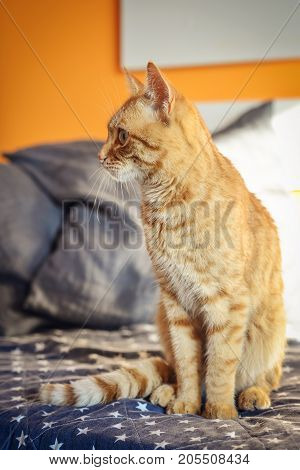 Cute Red Cat  On Sofa